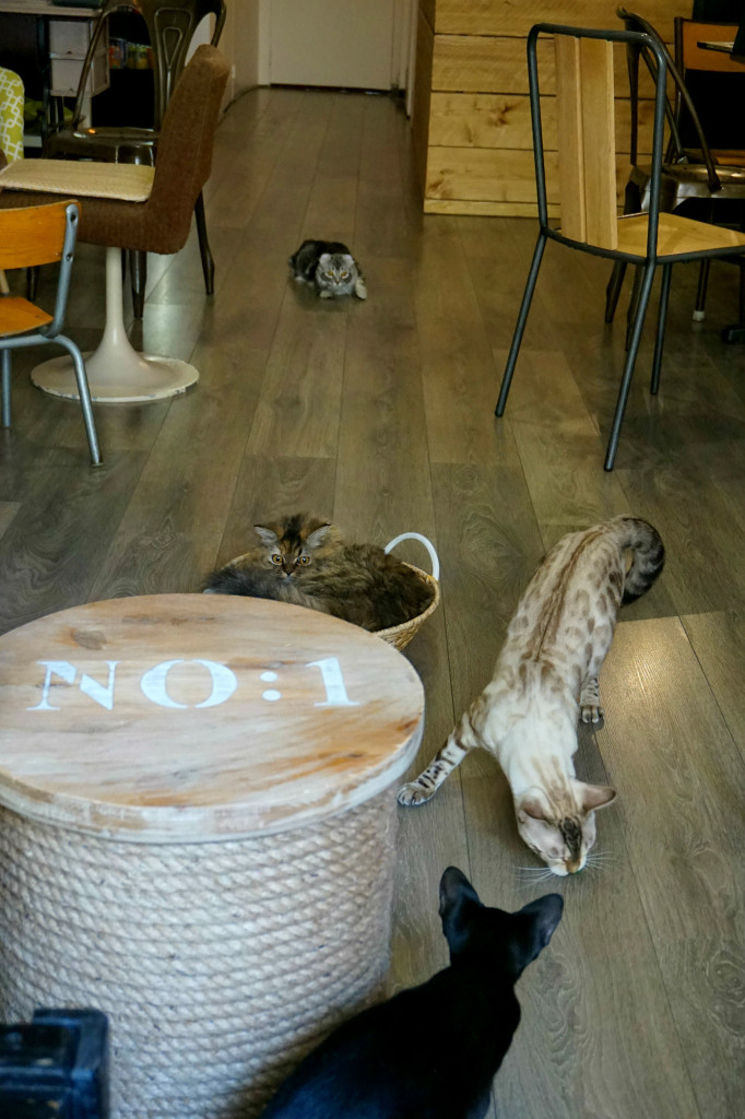 Les chats commencent à s'amuser