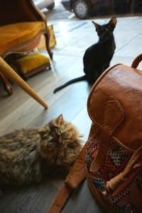 Les chats préparent un truc on dirait